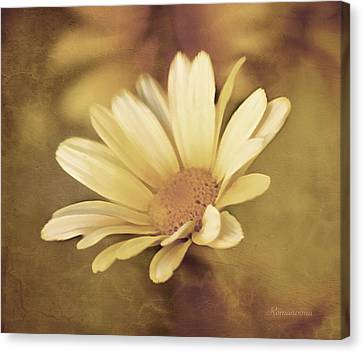 Lone Daisy - Vintage Style Canvas Print