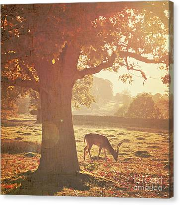 Canvas Print featuring the photograph Lone Deer by Lyn Randle