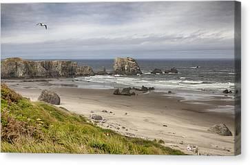 Lone Gull - Bandon Beach Canvas Print
