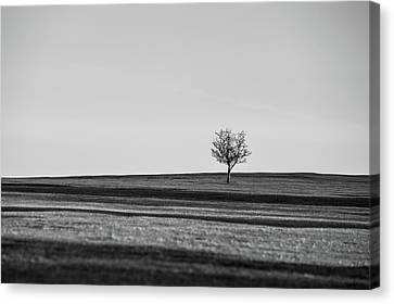 Lone Hawthorn Tree Iv Canvas Print
