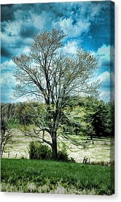 Lone Maple Canvas Print