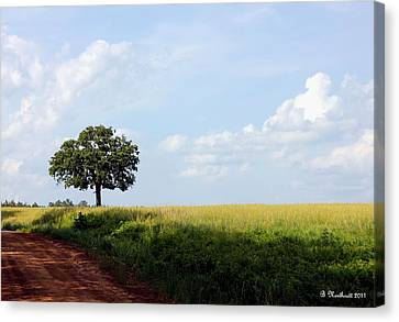 Lone Oak Canvas Print by Betty Northcutt