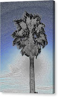 lone Palm 2 Canvas Print by Gary Brandes