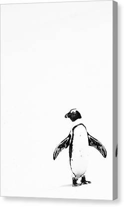 Lone Penguin Canvas Print by Victoria Hillman