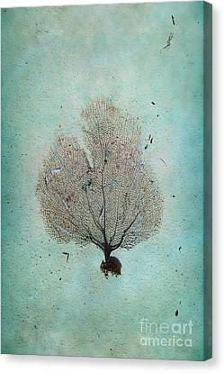 Lone Sea Fan Canvas Print