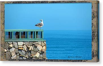 Lone Sea Gull Canvas Print by Doreen Whitelock