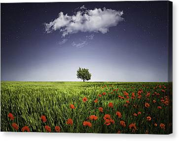 Lone Tree A Poppies Field Canvas Print by Bess Hamiti