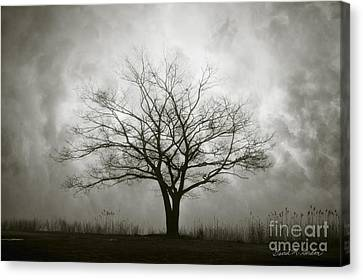 Lone Tree And Clouds Canvas Print by Dave Gordon