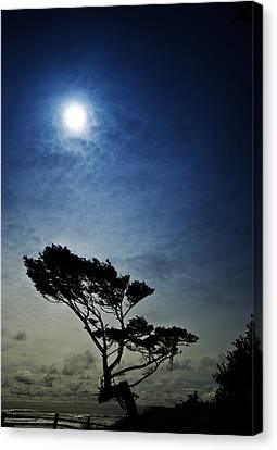 Lone Tree And Ocean Canvas Print