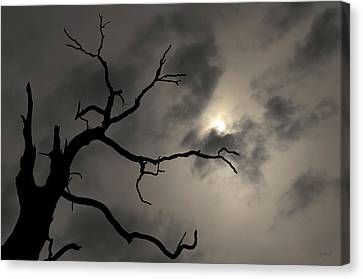Canvas Print featuring the photograph Lone Tree And Sun Toned by David Gordon