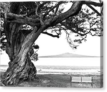 Lone Tree Bench And Volcano Canvas Print by Yurix Sardinelly