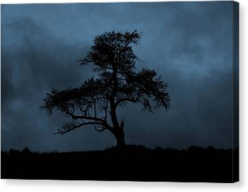 Lone Tree Blue Canvas Print