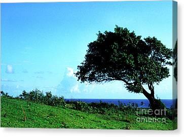 Lone Tree Blue Sea Canvas Print by Thomas R Fletcher