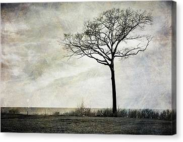 Lone Tree By The Lake Canvas Print by Mary Lee Dereske