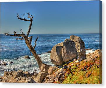 Lone Tree California Coast Canvas Print by James Hammond