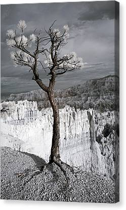 Lone Tree Canyon Canvas Print by Mike Irwin