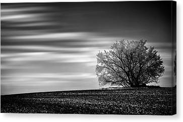 Canvas Print featuring the photograph Lone Tree by Dan Jurak