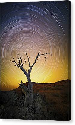 Breath Canvas Print - Lone Tree by Edgars Erglis