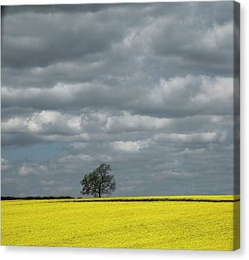 Canvas Print featuring the photograph Lone Tree by Elvira Butler