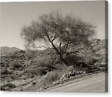 Lone Tree Canvas Print by Gordon Beck