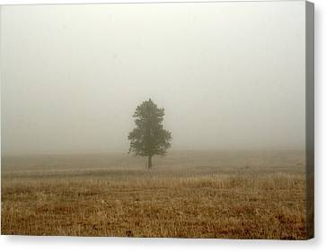 Lone Tree In Fog Canvas Print by Suzanne Lorenz