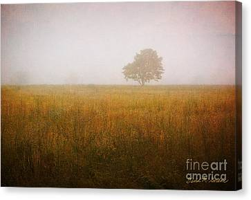 Lone Tree In Meadow No. 2 Canvas Print by Dave Gordon
