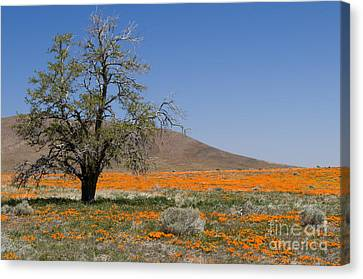 Lone Tree In The Poppies Canvas Print by Sandra Bronstein