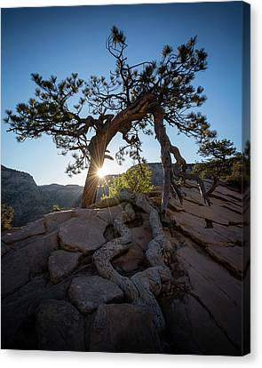 Lone Tree In Zion National Park Canvas Print by James Udall