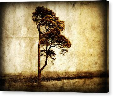 Lone Tree Canvas Print by Julie Hamilton
