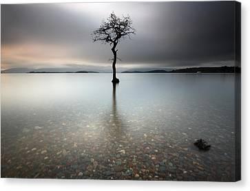 Lone Tree Loch Lomond Canvas Print