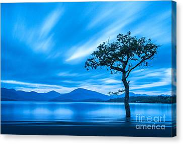 Scotland Canvas Print - Lone Tree Milarrochy Bay by Janet Burdon
