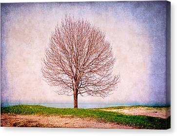 Lone Tree Canvas Print by Milena Ilieva