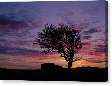Lone Tree Near Holwell Tor On Dartmoor Canvas Print