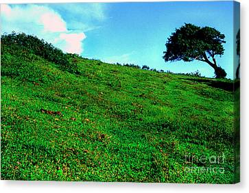 Lone Tree On Hill  Canvas Print by Thomas R Fletcher