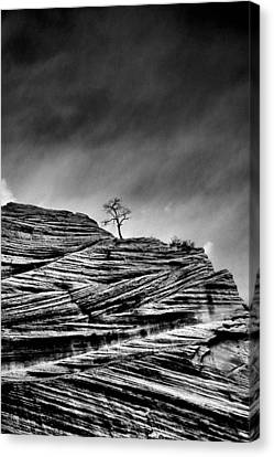 Lone Tree Rid Canvas Print by Sarah-jane Laubscher