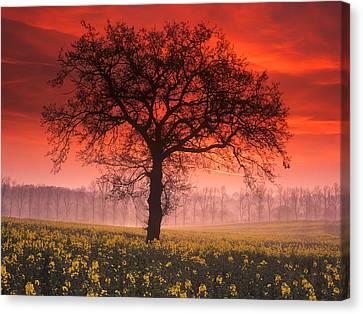 Lone Tree Sunrise Canvas Print by John Perriment