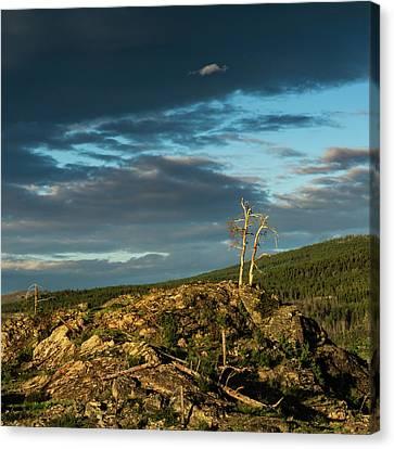 Lone Tree Sunset Canvas Print