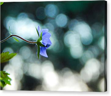 Lonely Blue Canvas Print