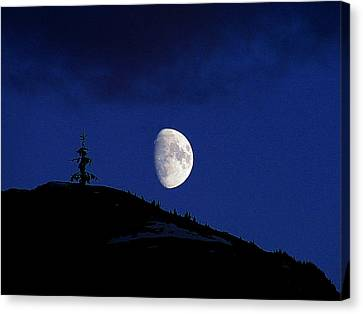 Canvas Print featuring the photograph Lonely Companion by Blair Wainman
