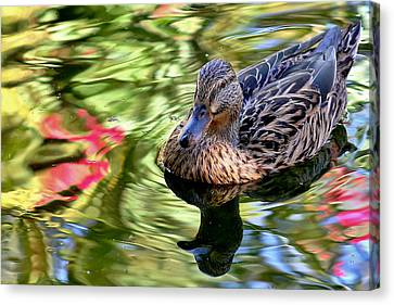 Canvas Print featuring the photograph Lonely Duckie by Elaine Malott