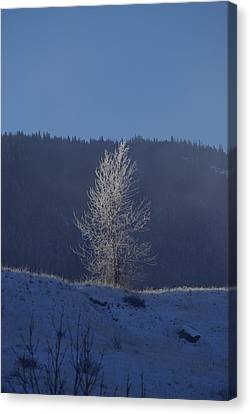 Lonely Frosty Tree Canvas Print