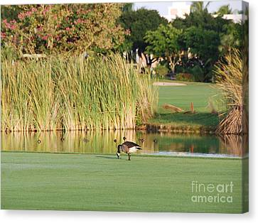 Lonely Goose On The Golf Course Canvas Print by Jan Daniels