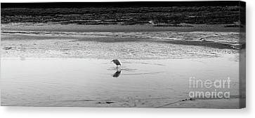 Canvas Print featuring the photograph Lonely Heron by Nicholas Burningham