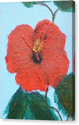 lonely Hibiscus  Canvas Print by Francis Roberts ll