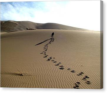 Lonely Hiker In The Gobi Canvas Print by Diane Height