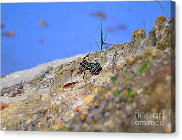 Canvas Print featuring the photograph Lonely Leopard by Al Powell Photography USA