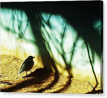Canvas Print featuring the photograph Lonely Little Bird by Shawna Rowe