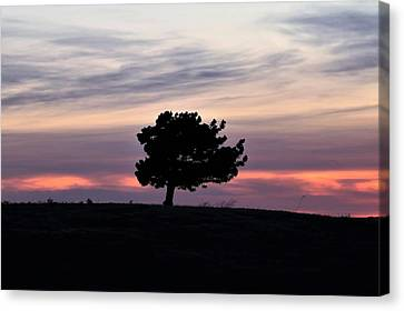 Canvas Print featuring the photograph Lonely Little Pine At Sunset by Sheila Brown