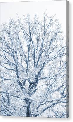 Canvas Print featuring the photograph lonely Oak tree in snowy, misty landscape by Christian Lagereek