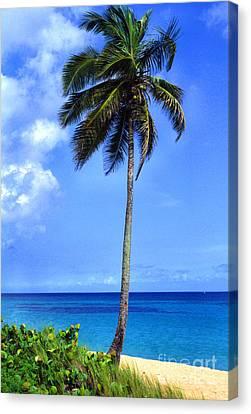 Lonely Palm Tree Los Tubos Beach Canvas Print by Thomas R Fletcher